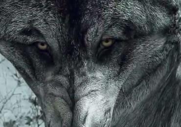 2401348-wolf+dlc